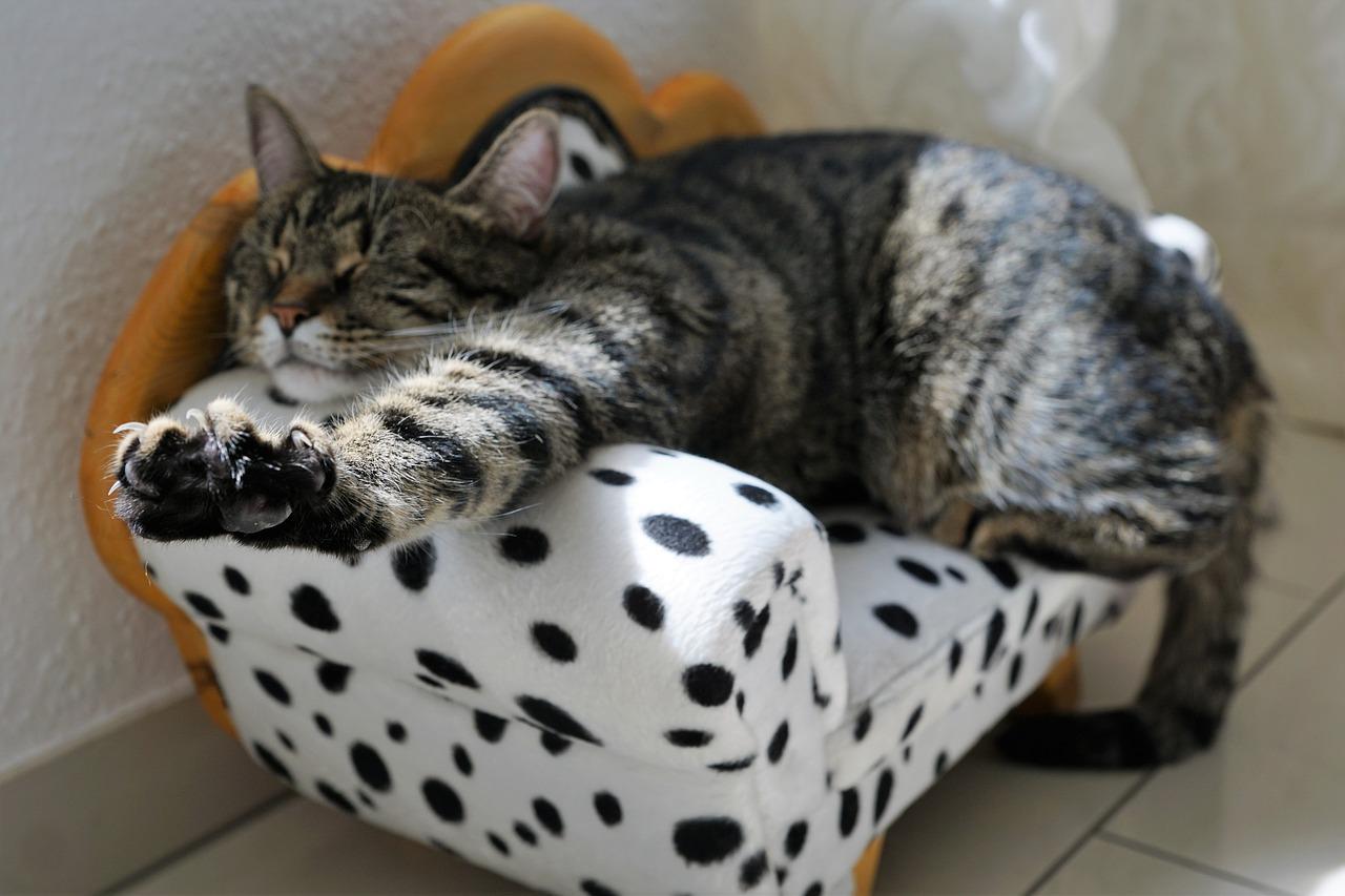 Un buen colchón es fundamental para un descanso correcto